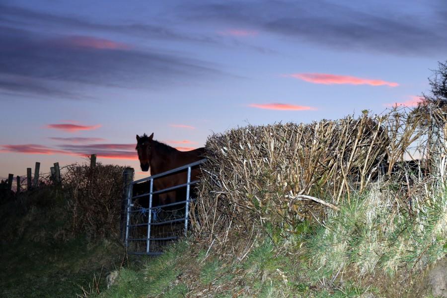 Rural 7