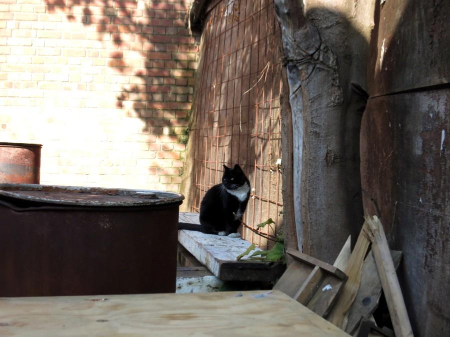Bussey Cat